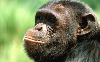 3 Days Kibale Chimpanzee Trek