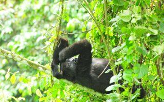 Dian Fossey & Lake Kivu