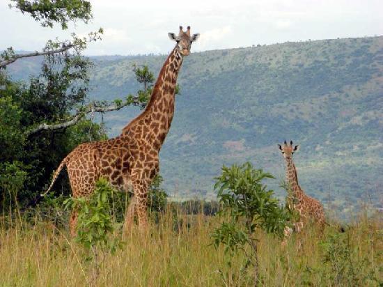 3 Days Rwanda Wildlife Experience