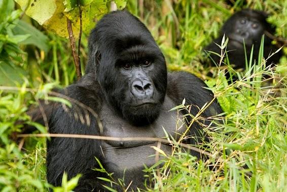 7 Days Uganda Rwanda