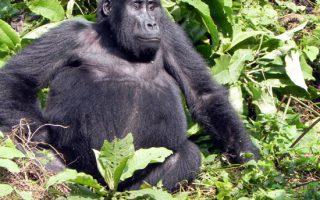5 Days Rwanda