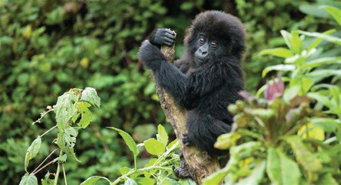 6 Days Rwanda Gorilla Holiday