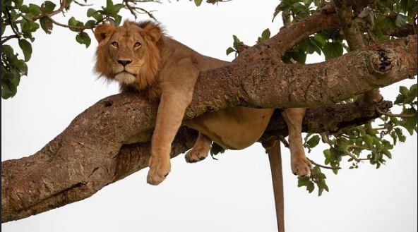 7 Days Rwanda Uganda Primates Safari