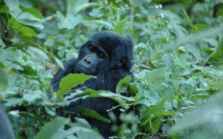 10 days uganda rwanda tour