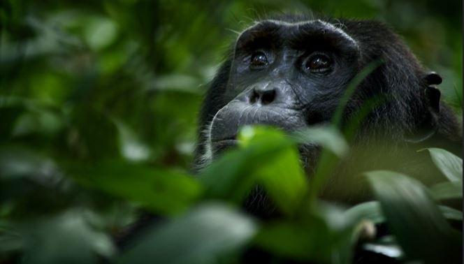 5 Days   best Uganda Wildlife and Chimp safari