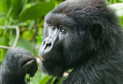 8 Days Rwanda Gorillas