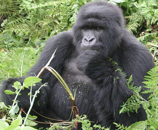 7 Days Rwanda Gorillas