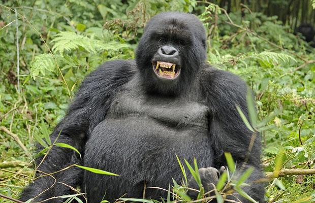 Gorilla Trek & Lake Kivu
