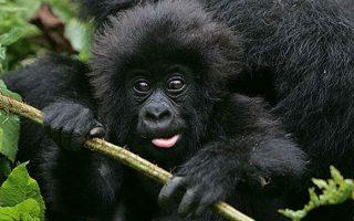 5 Days Rwanda Wildlife