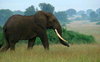 14 Days Rwanda Safari