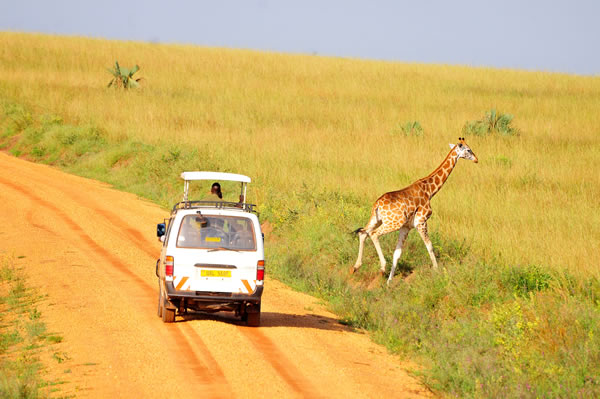5 Days Uganda Wildlife tour