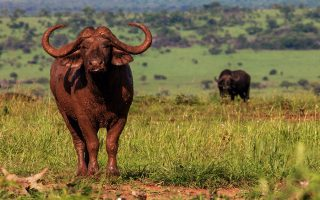 Entrance Fees for Kidepo Valley National Park
