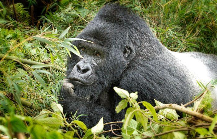 3 Days Rwanda Gorillas and Lake Kivu