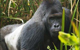 6 Days Virunga, Nyiragongo and Kahuzi Biegaa