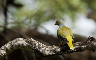 Birding in Bwindi Impenetrable National Park