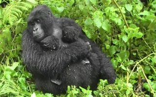 Is Uganda Safe?