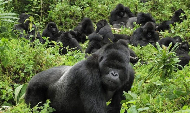 Best time to see gorillas in Rwanda