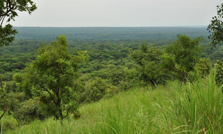 Bodongo Forest