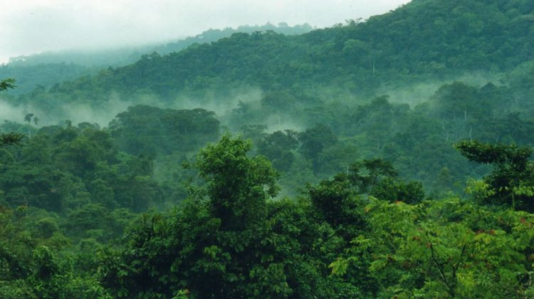 Hiking and Nature Walks in Bwindi