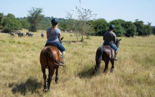 Horse Riding in Lake Mburo