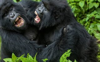 List of Gorilla Parks in Uganda