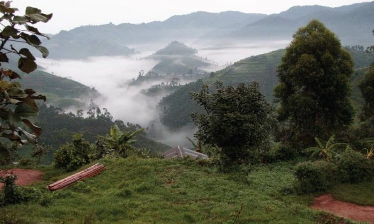 Rushaga Region of Bwindi