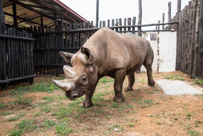 5 Eastern Black Rhinos
