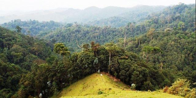 Gishwati Forest Reserve