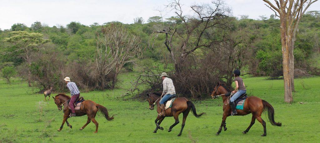 horse rides in mburo