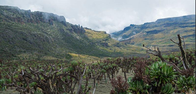 vegetation of elgon national park