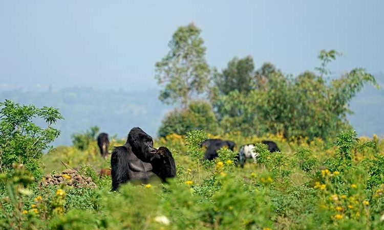 How To Get To Virunga National Park Getting To Virunga National Park