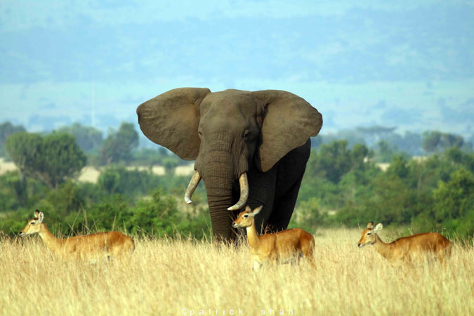 16 Days Pearl of Africa Safari