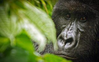 5 Days Great Ape safari