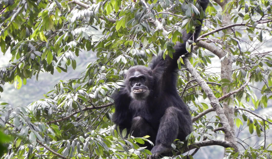 5 days Nyungwe Chimpanzee Trekking and Kahuzi Biega