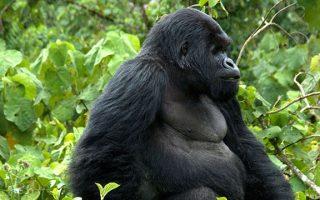 4 days Bwindi Gorilla Trekking and Lake Bunyonyi