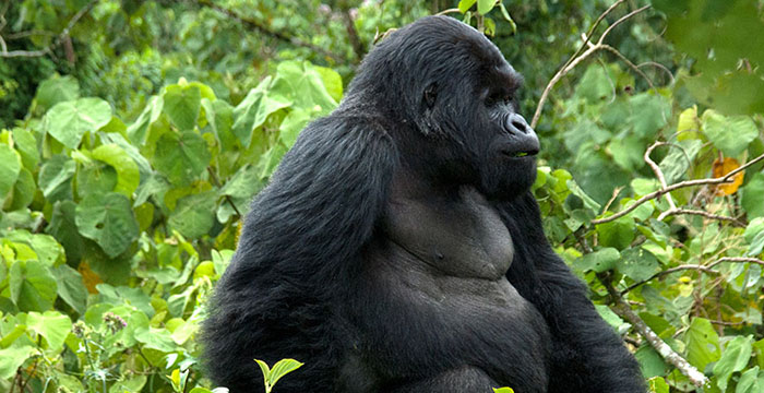 4 days Bwindi Gorilla Trekking and Lake Bunyonyi