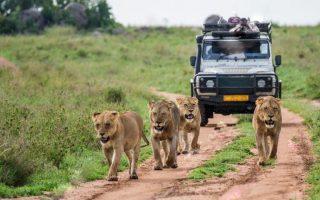 What to Expect During Uganda Safaris